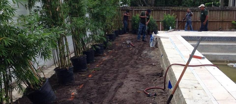 Bamboo Trees for a New Construction Landscape Design and Installation Project in Orlando, Florida